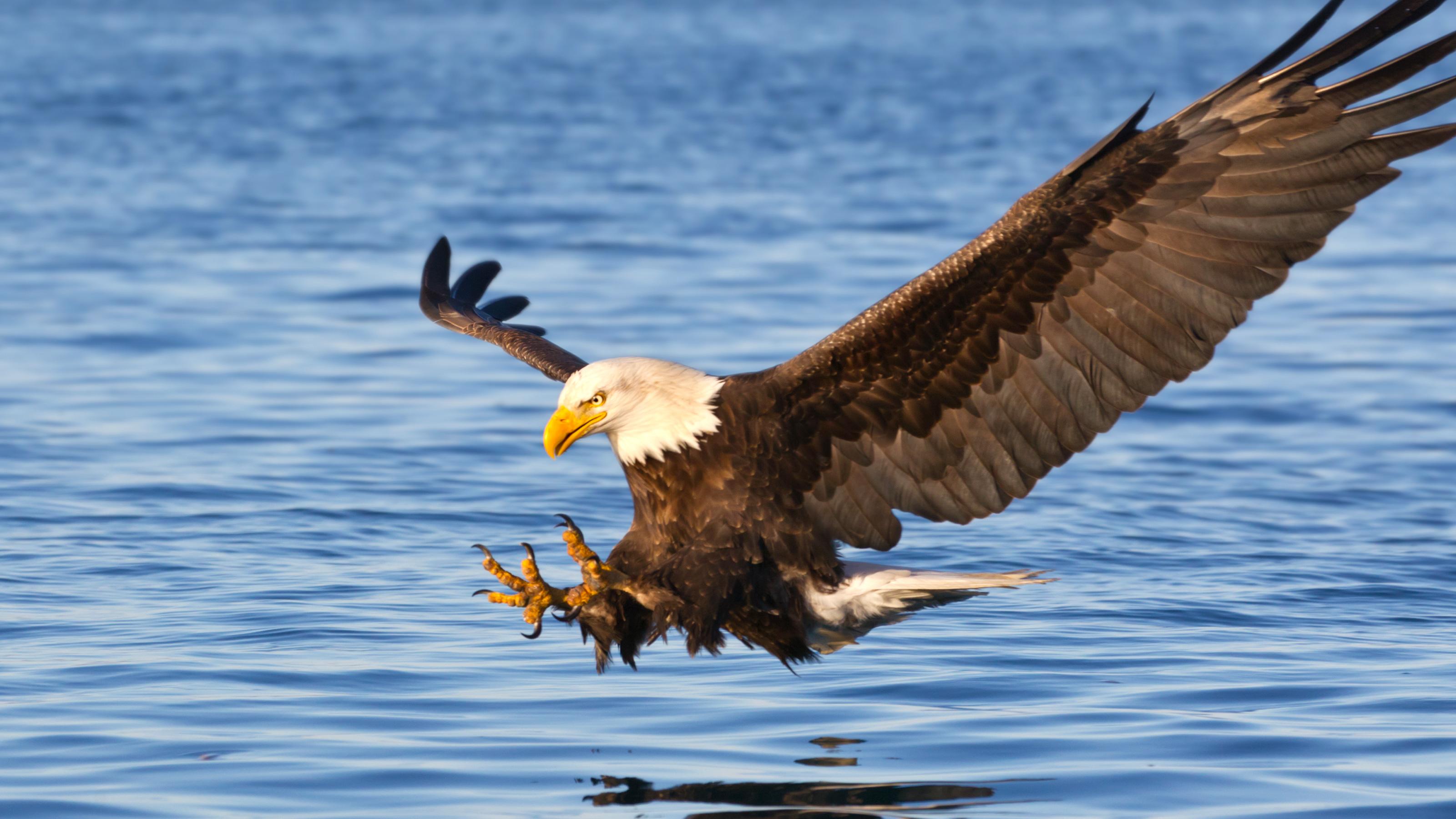 雲講堂-【動物英語大驚奇】翱翔天際的老鷹
